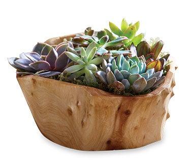 Shop Pots + Planters