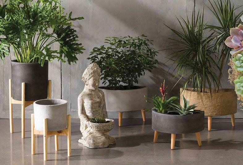 Shop Live Plants