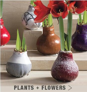 Shop Plants + Flowers