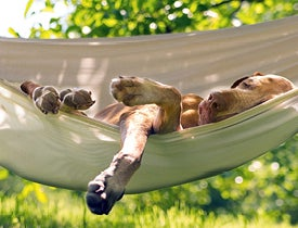 Viva Terra Blog - Best Backyard Hangout Ideas